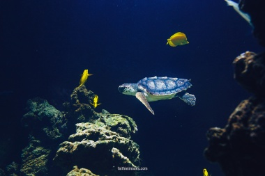 Sea turtle dudes by Faithieimages