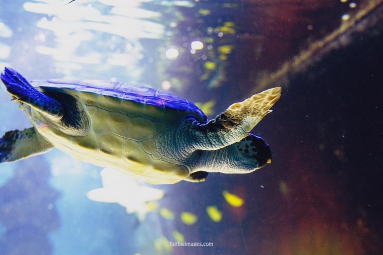 Sea turtle dudes by Faithieimages