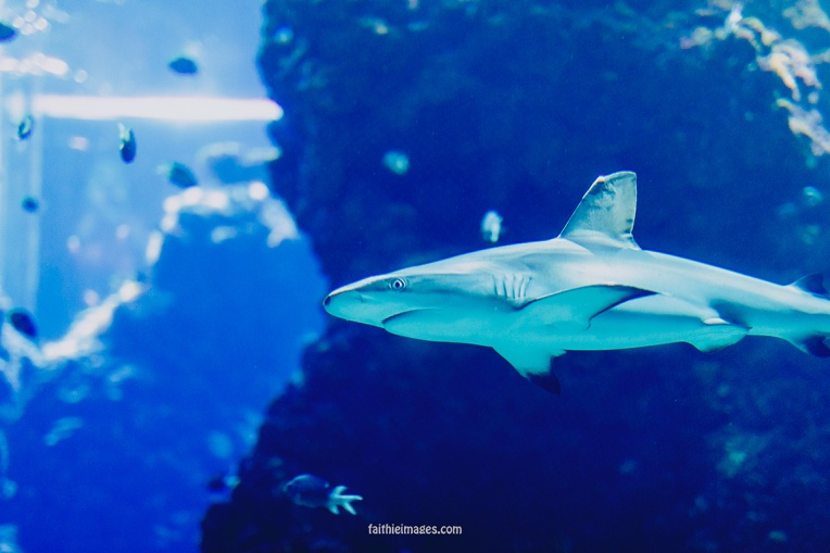Sharks by Faithieimages