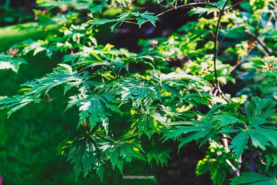 Faithieimages - Biodiversité 001