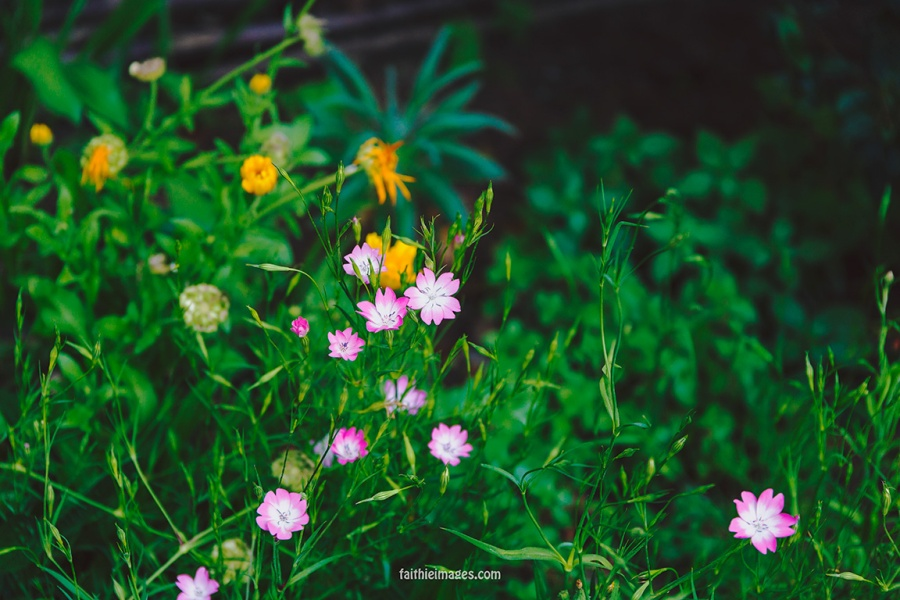 Faithieimages - Biodiversité 002