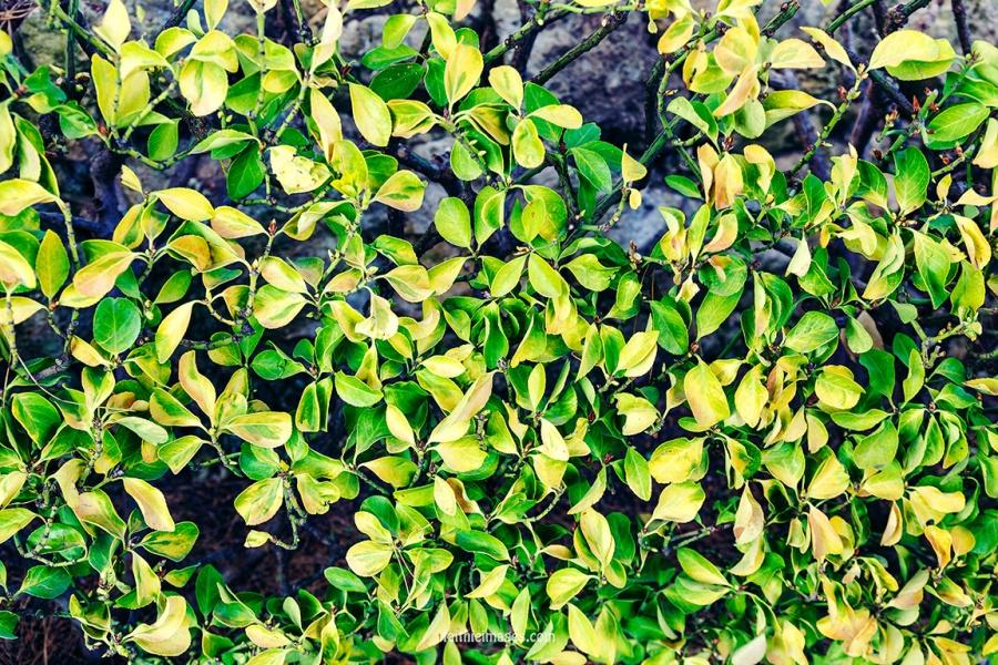 Faithieimages - Biodiversité 017