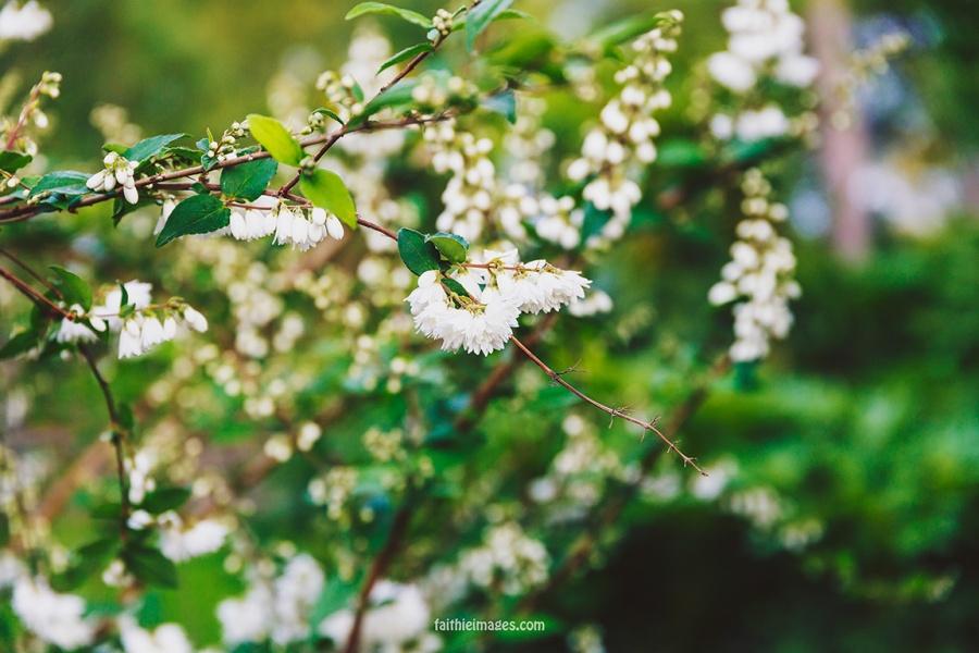 Faithieimages - Biodiversité 018