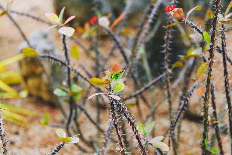 Faithieimages - Biodiversité 019