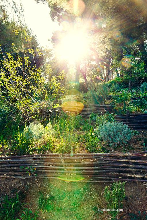 Faithieimages - In the Jardins 001
