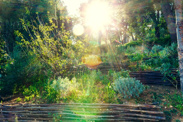 Faithieimages - In the Jardins 004