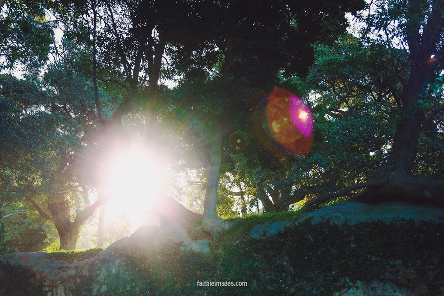 Faithieimages - Light and trees 001