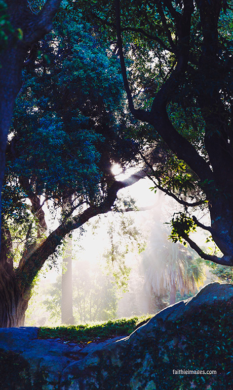 Faithieimages - Light and trees 002