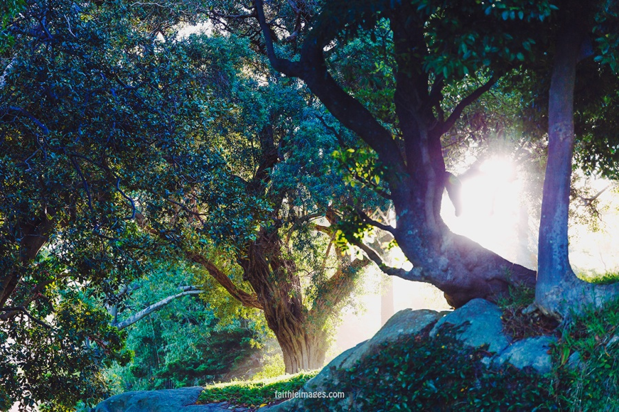 Faithieimages - Light and trees 003
