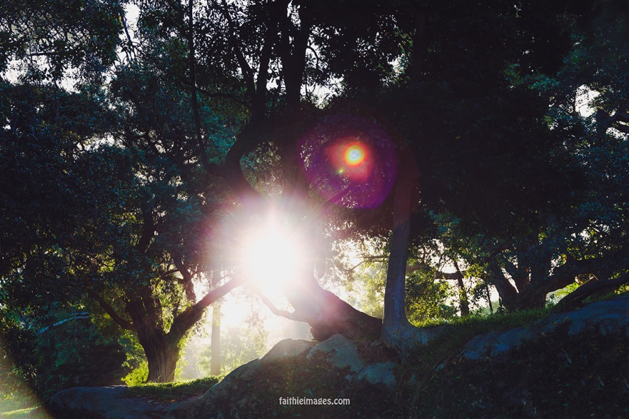 Faithieimages - Light and trees 004