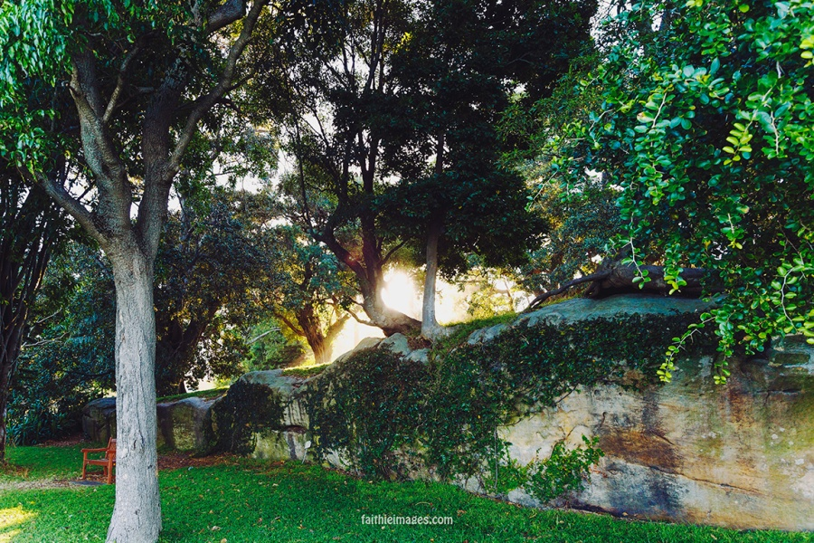 Faithieimages - Light and trees 005