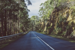 Australian countryside landscape in winter, the bush of Tasmania in the Houn Valley