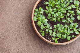 small forget-me-not seedlings in terracotta pot on concrete terrace background